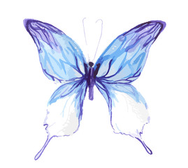 Isolated watercolor colorful butterfly on white background. Beautiful fragile creature for decoration. Wings with pattern.