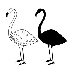 Flamingo bird vector illustration. Beautiful animal silhouette hand drawn sketch
