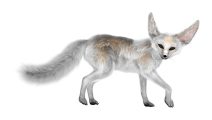 3D Rendering Fennec on White