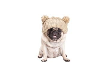 schattige mopshond puppy met gebreide muts