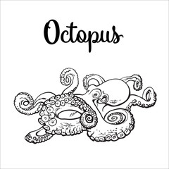 Live octopus, sketch style vector illustration isolated on white background. Drawing of octopus, luxury seafood delicacy. Edible underwater creature, healthy organic food