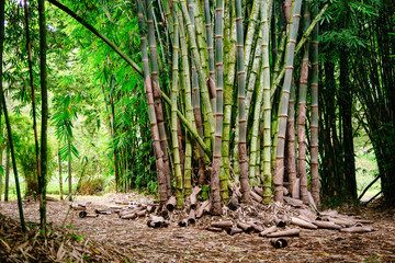 Wall Mural - Bamboo landscape