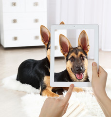 Female hands taking photo of cute puppy on tablet.