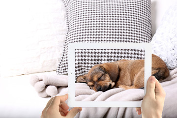 Male hands taking photo of cute sleeping puppy on tablet.