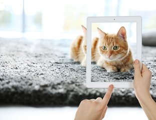 Female hands taking photo of cute cat on tablet.