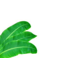 Fresh Banana Leaf Isolated On White