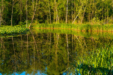 Trees mirrored in glass-smooth waters of Beaver Marsh in Cuyahoga Valley National Park, Ohio