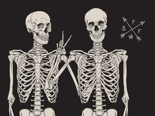 Human skeletons best friends posing isolated over black background vector