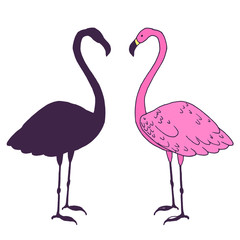 Flamingo bird vector illustration. Beautiful pink animal silhouette hand drawn sketch