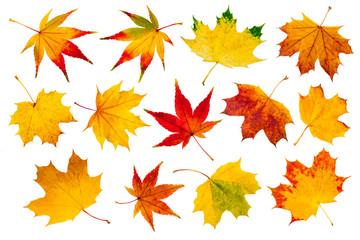 Wall Mural - Bunte Herbstblätter Collage vor weißem Hintergrund