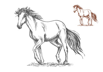Running white horse sketch portrait