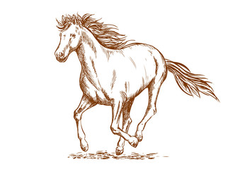 Brown horse sketch of arabian mare