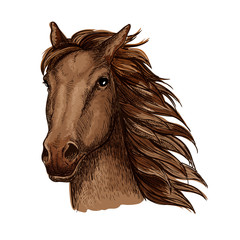 Brown racehorse sketch for horse racing design