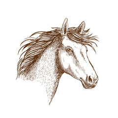 Sketch of horse head for equine design