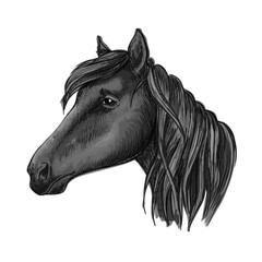 Black riding horse sketch for equestrian design