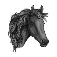 Sketch of black horse head of arabian breed