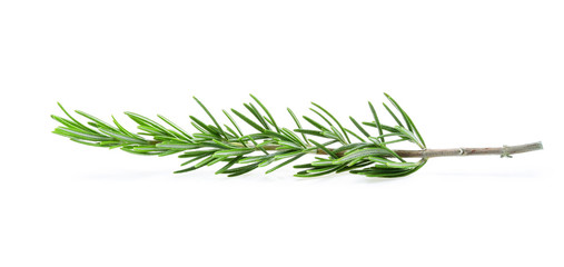 Fresh green sprig of rosemary isolated on white background.