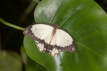 butterfly sits on a green leaf