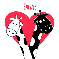 Cute cartoon black white giraffe boy and girl Big heart. Camelopard couple on date. Funny character set. Long neck. . Happy family. Word Love Greeting card. Flat design. Isolated.