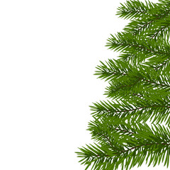 Green lush spruce branch. Fir branches. Isolated on white illustration