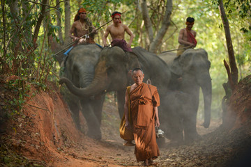 Elephant and Monk ,Surin Thailand