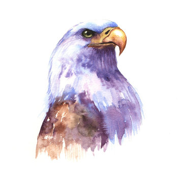 Hand-drawn watercolor drawing of the beautiful eagle. The symbol of the USA - eagle illustration isolated on the white background