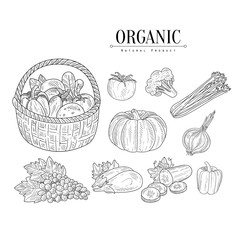 Organic Farm Vegetables Isolated Hand Drawn Realistic Sketches