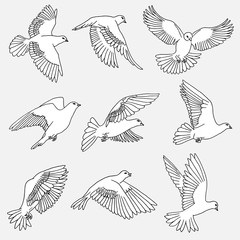 Hand drawn isolated illustration of doves / pigeons