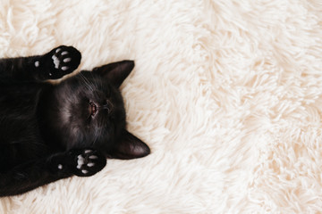Wall Mural - Kitten sleeping on carpet