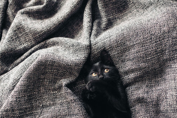 Wall Mural - Kitten on blanket