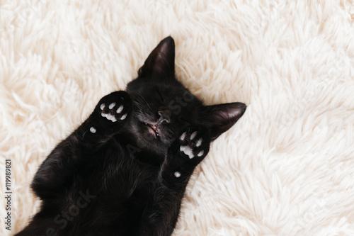 Если черная кошка нападет, то столкнуться с неприятелем придется лицом к лицу.