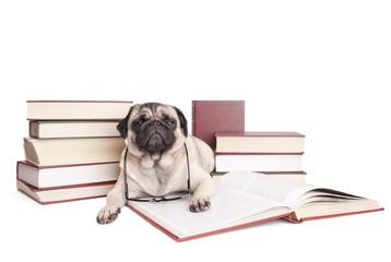 Foto auf AluDibond Hund lieve kleine hond, mopshond, omringd door boeken kijkt verstoord op uit boek met leesbril om nek, geisoleerd op witte achtergrond