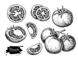 Tomato vector drawing set. Isolated tomato, sliced piece vegetab