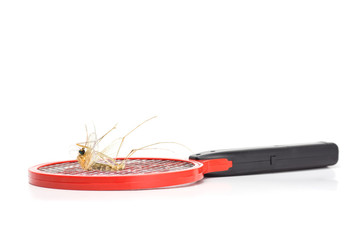 death mosquito on mosquito swatter