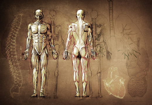 human anatomy drawing, old, canvas