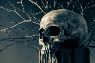 still life photography : human skull on tree stump with dry twig on dark background in vintage color tone