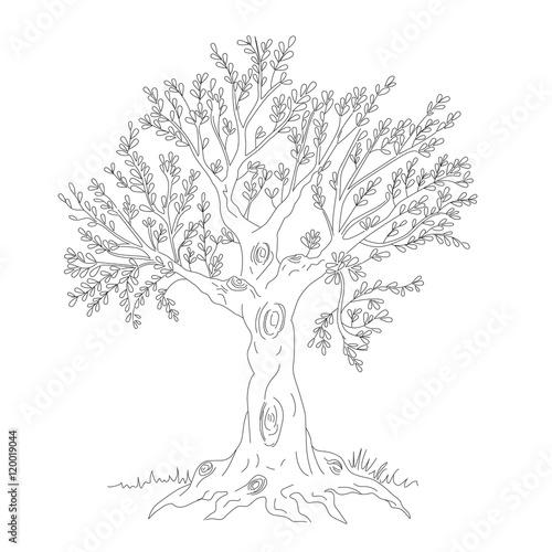 Ulivo immagini e vettoriali royalty free su for Acquisto piante ulivo