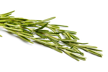 Fresh green sprig of rosemary