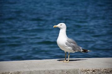 Möwe, Vogel, Gefieder, Schnabel, Kopf, Küste, Wasser, Meer