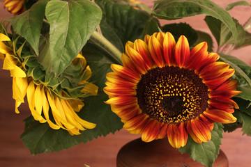 Sunflowers - Valuable oilseed