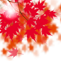 Red maple leaves on the branches. Japanese red maple. Against the background of autumn leaves. illustration