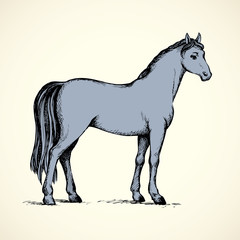 Elegant white horse. Vector drawing