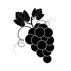 Isolated branch of grape, white on black background