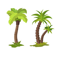 Palm trees on a white background. Vector illustration
