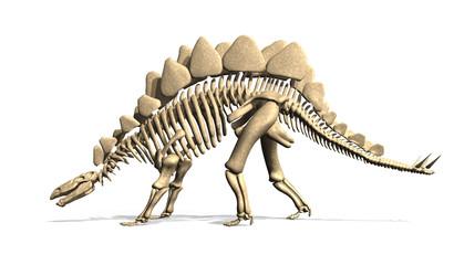 Stegosaurus Skeleton from Side