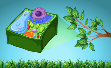 Plant cell and green leaf