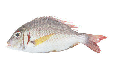 Pink ear emperor fish isolated on white background, Lethrinus lentjan