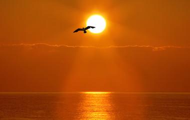 Foggy Sunset Horizon