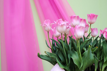 Tulips have pink and green background.