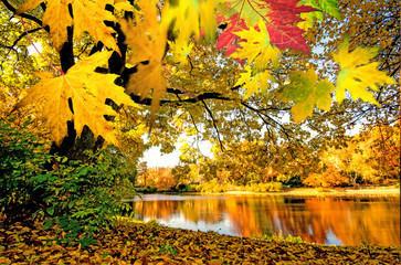 Meditation, Relaxation: Wonderful day in autumn at a silent like :)